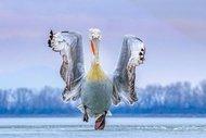 2019 yılının en güzel kuş fotoğrafları