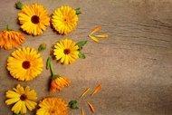 Aynısefa bitkisinin faydaları nelerdir?