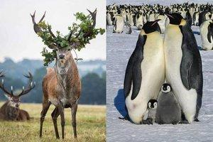 Hayvanlar hakkında hiç bilmediğiniz 24 gerçek