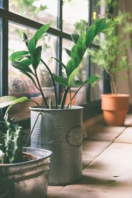 Evde yetiştirmesi kolay bitkiler