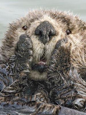 2019'un en komik vahşi doğa fotoğrafları