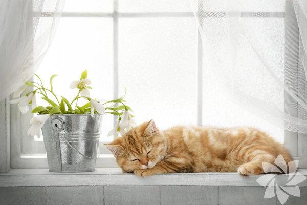 Kediler etobur yani etle beslenen canlılardır. Yine de zaman zaman kedileri, ot kemirirken, evdeki saksılarınıza çeşitli komplolar kurarken görebilirsiniz. Kediler bitkileri ana besin maddeleri olarak tüketmez, ama sağlıklı olmak için tükettikleri görülmüştür. Özellikle ağrılarını dindirmek için ot kemirdikleri bilinir. Bu nedenle onları sık sık yeşilliklerin içinde otları kemirirken görebilirsiniz. Ne var ki bazı bitkiler kediler için toksik olabiliyor. Evde yetiştirdiğiniz bitkilerin kedinizi zehirlemesini istemiyorsanız size kediniz için güvenli ev bitkilerini derledik.