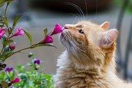 Bu bitkiler kedilere zarar vermiyor!