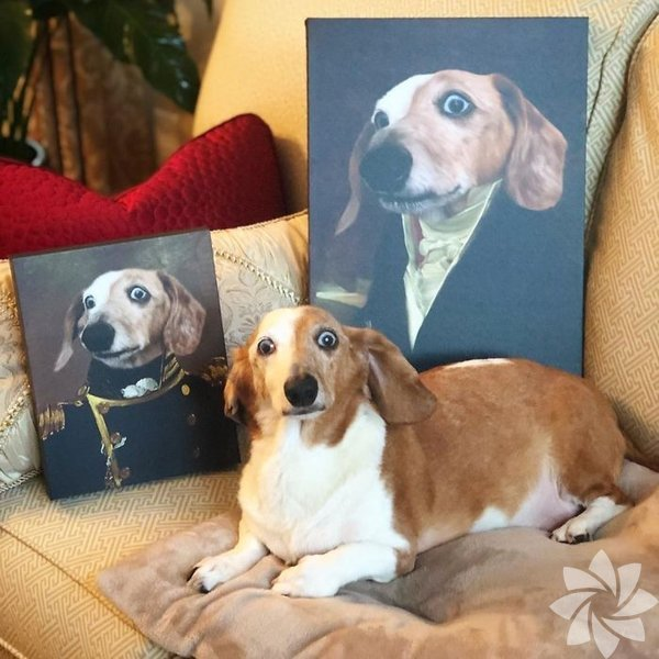 Hayvan portre çizimleri
