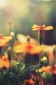 Sonbaharı renklendiren 10 favori çiçek