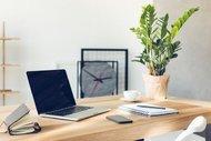 Ofislerde canlı bitki bulundurmanın 5 faydası