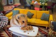 Sevimli hamsterların minik kasabası