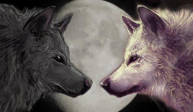 İçimizde iki kurt yaşıyor