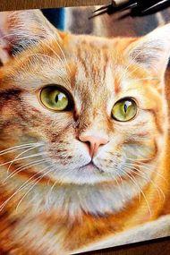 Bu kedilerin çizim olduğuna inanamayacaksınız!