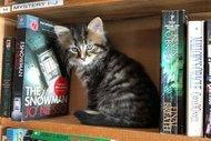 Kedi sahiplendiren kitapçı