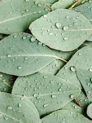 Diz ağrısına iyi gelen 7 bitki
