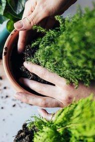 Antidepresan niyetine ellerinizi toprağa daldırın