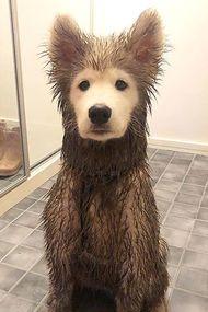 Köpeğinizi çamurda oynatmadan önce bir kez daha düşünün