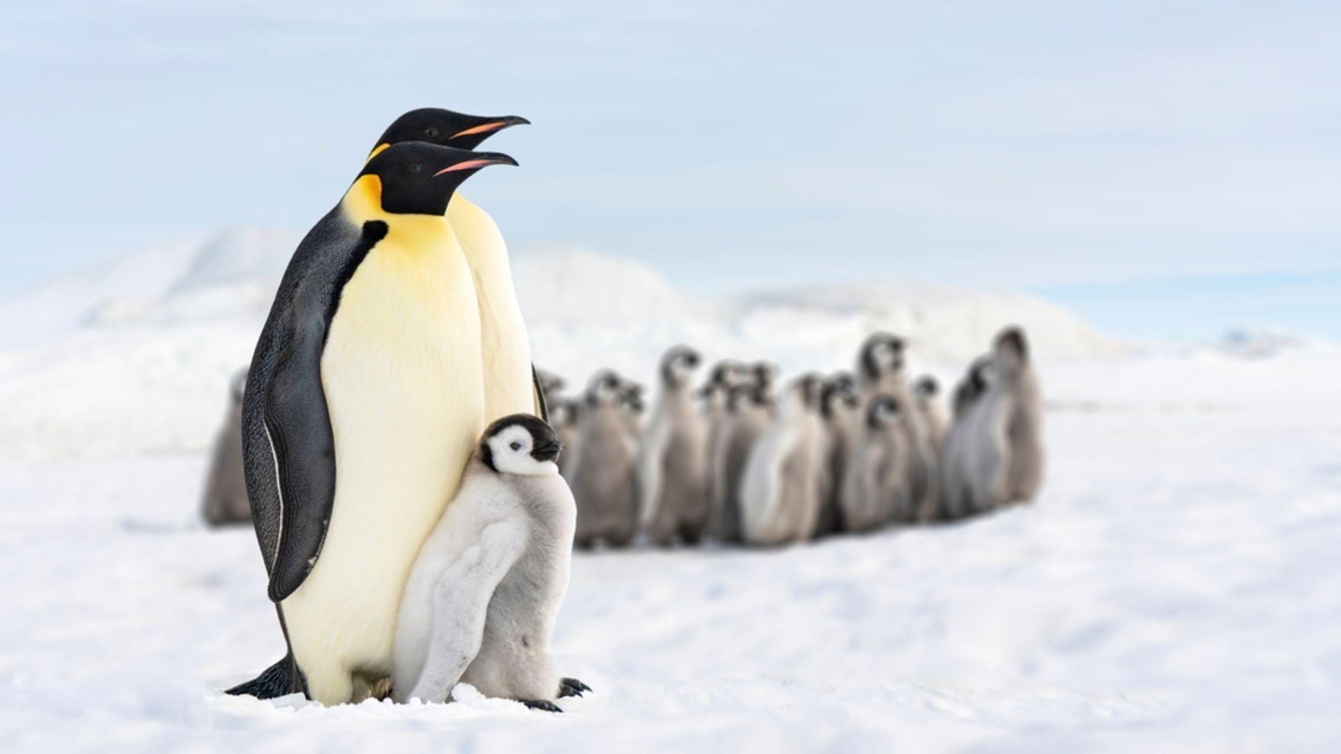 Çocuklarla birlikte izlenebilecek 14 belgesel
