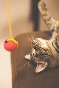 Kediniz için kendiniz oyuncak yapabilirsiniz!