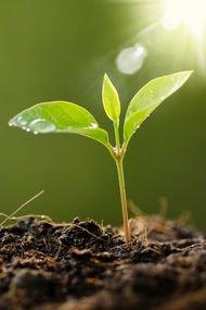 Sevgi tohumları…